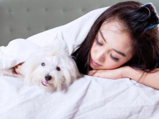 Maltese in bed with girl