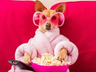 Chihuahua in pink bathrobe holding popcorn and remote