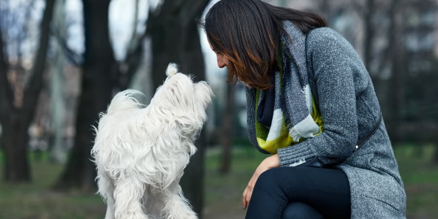 Maltese dog and woman staring at each other