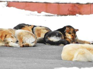 Dogs sleeping in winter
